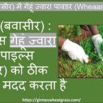 Wheatgrass-2Bfor-2BPiles.jpeg