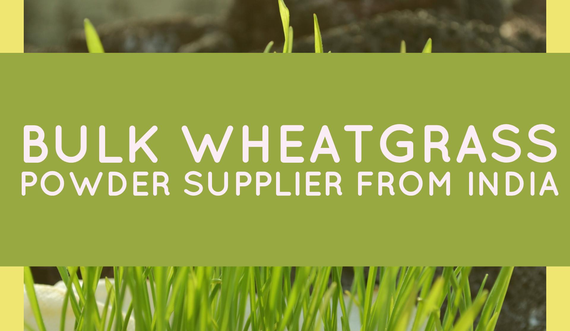 Bulk-Wheatgrass-Supplier